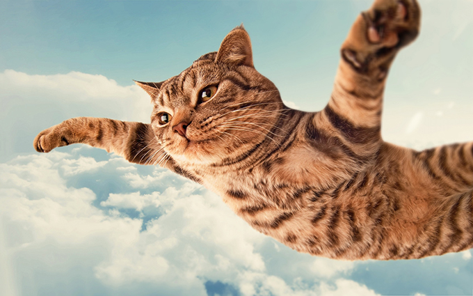 Cat-in-Clouds